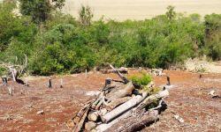 Investigado por desmatar área de Mata Atlântica no Paraná tenta matar policiais e é preso, diz PM